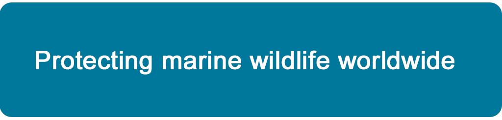 Protecting marine wildlife worldwide
